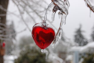 Ice storm beauty