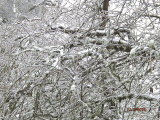 Icey trees