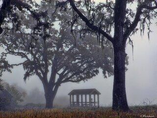 Gazebo  in the fog