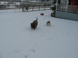 In Lorane the dogs love the snow too