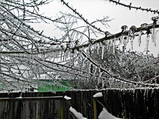 My Frozen Cherry Tree