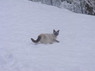 Cats, Dogs, And Snow! Oh my!
