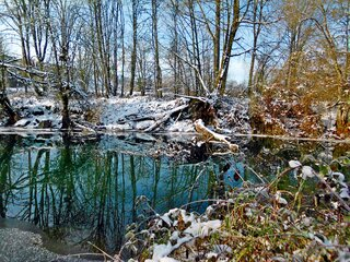 Snow Scenes On The McKenzie River