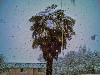 Palm tree with snow