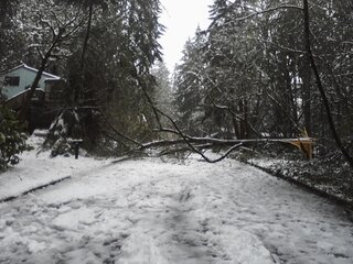 Tree fell across road