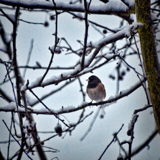 Bird in winter
