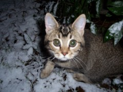 Sibey's first snow picture