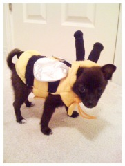 Best Pet Costume-Yogi the Bee