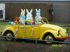 Spring Bunnies Arrive in Style