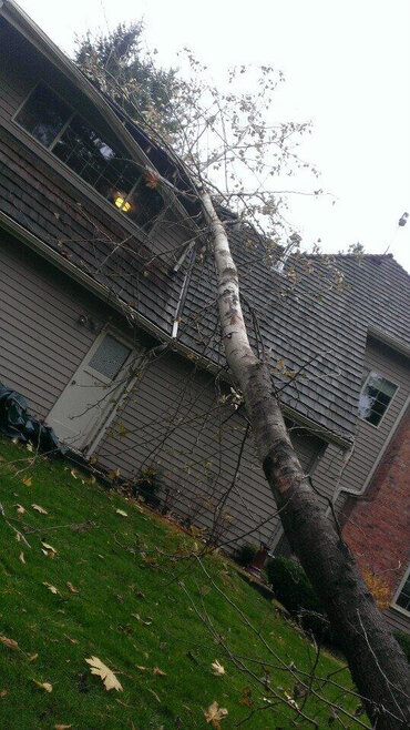 Western Washington Windstorm Damage