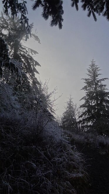 Freezing fog on Ridgeline Trail on January 22 2013 (11)