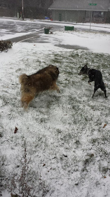 Viewer photos - National Love Your Pet Day (7)