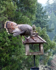 wild turkey tricks