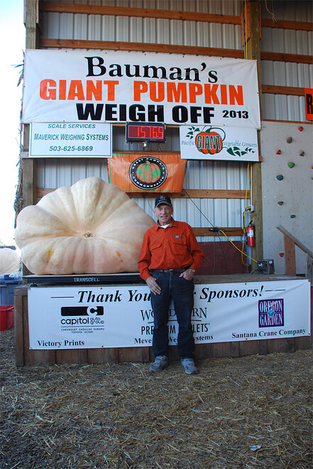Giant pumpkin 2013