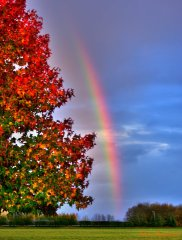 Rainbow and matching fall colors