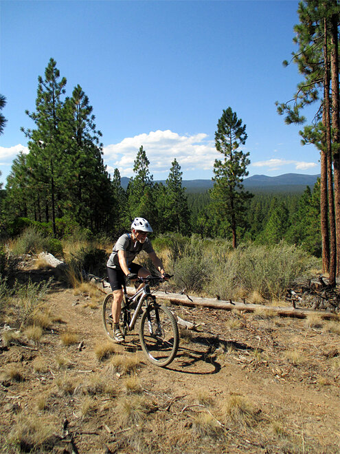 Outdoors-Mountain Biking-Skyline Forest