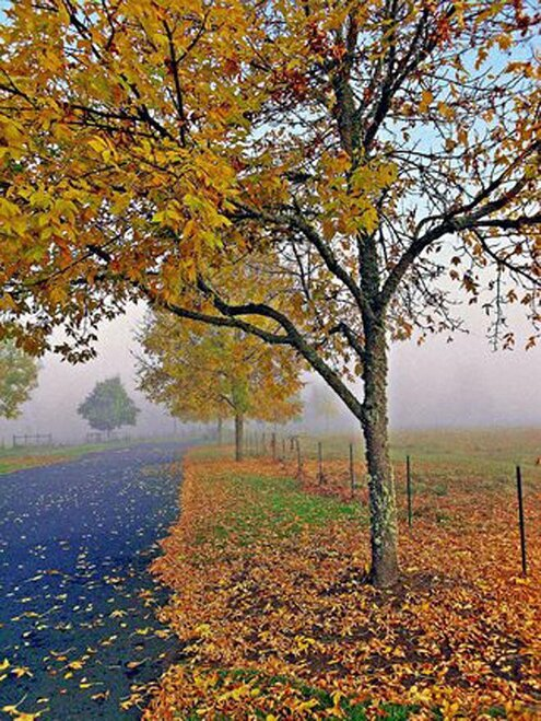 Autumn color in the fog - photomike 68