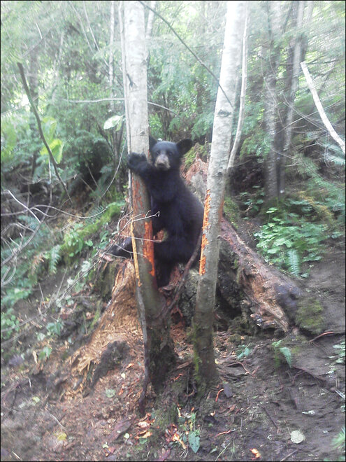 Wildlife agents rescue stuck bear cub