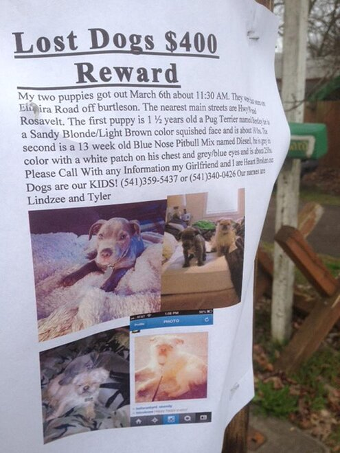 Dog disappearance under investigation