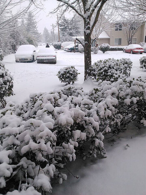 Kalena Doolittle photo of Friday morning snow