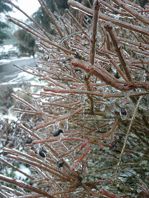 Lisa Walker Walley photo of ice