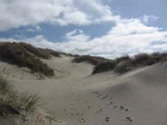 Sandy Solitude - Florence, Oregon