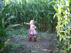 In the Corn Maze!