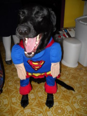 Jake as SUPERMAN