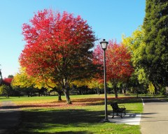 Eugene's Beautiful Fall Colors