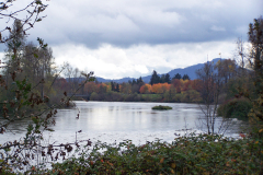 Autumn on the Willamette River in Eugene