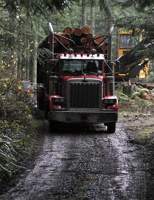 Supreme Court Logging Roads