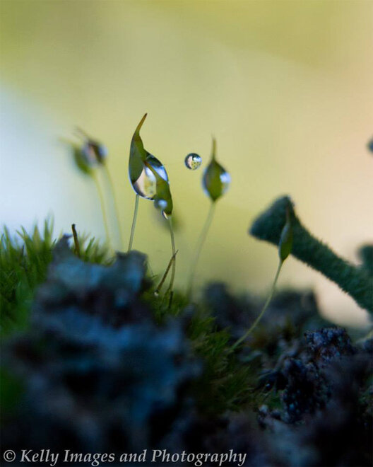 Photographer captures intricate dew drops in nature