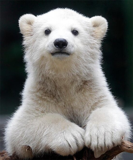 APTOPIX Germany Polar Bear Cub