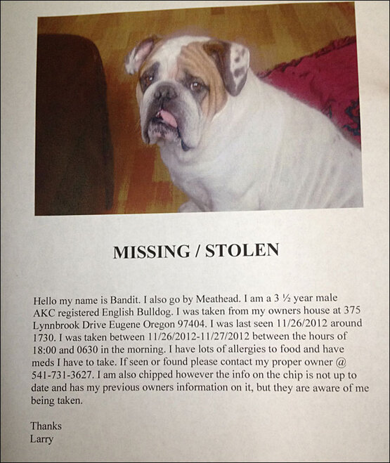 missing/stolen flyer for Meathead/Bandit
