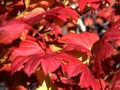 Close up of Autum Leaves