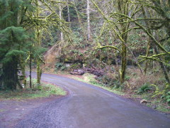 Road along the Siuslaw river