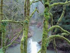 Siuslaw River in January