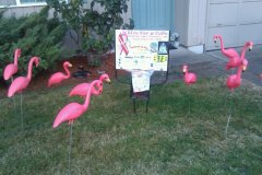 Flamingos Congregate in Eugene