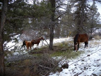 2 dozen wild horses starving in Oregon