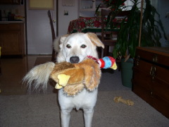 Bugz and his pheasant