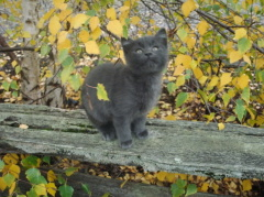 Ninja kitty enjoying the fall day