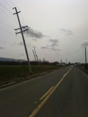 Power Line problem on Powerline Rd.