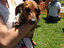 6th annual Wiener Dog Races in Cottage Grove - Photo by Carley Gomez, KVAL News