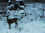 Joe Ross snow deer Roseburg December 6