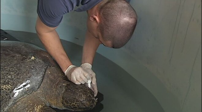 Sea turtle rescued from Oregon beach (1)
