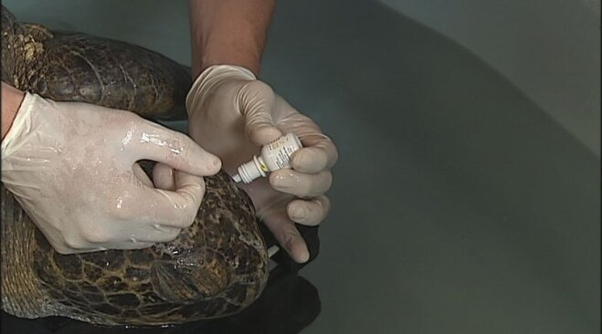 Sea turtle rescued from Oregon beach (2)