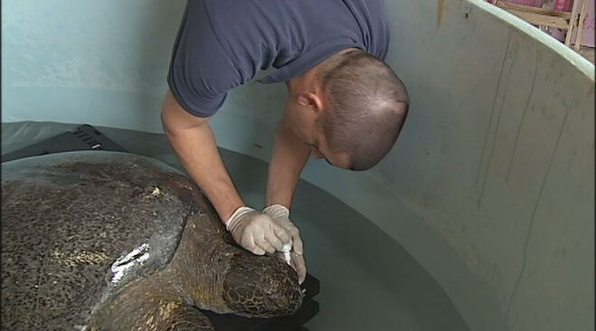 Sea turtle rescued from Oregon beach (3)