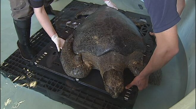 Sea turtle rescued from Oregon beach