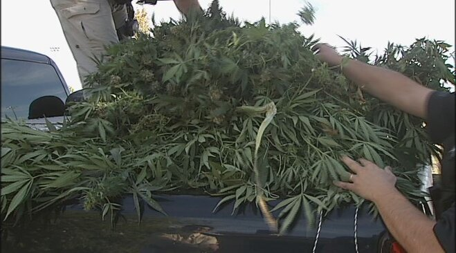 Marijuana grow busted on 24th