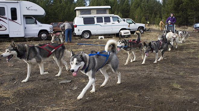 'I am not just a musher with dogs. I am part of a team'